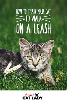 How to Train your Cat to Walk on a Leash. Cats can walk with harnesses or leashes. Leash training for cats can be done even though it is less common. Check out these cat care tips on how to walk your cat on a leash. #SmartCatLady #cats