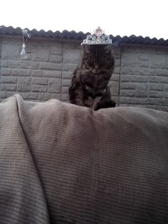 I am the king now tell me were the fridge is