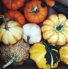Fall reminds us that being unique makes all the difference. #fallfaves #pumpkins #gourds