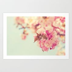 Cherry+Spring+Art+Print+by+Kristybee+-+$18.00