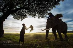 The silhouette of a person riding an elephant by Pitakchatr