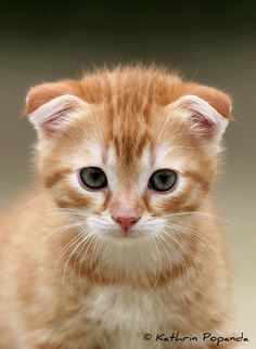Photo Kitten by Kathrin Popanda on 500px      If you love pets, go here! http://myhobbies.biz/