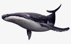 It is of type png. It is related to and tycoon monster corset whales of wildlife hulk adventures marine mammal humpback whale deep killer whale cetacea whale fauna porpoises. Animals Tattoo, Whale Crafts, Great Whale, Whale Painting, Whale Illustration, Whale Art, Blue Whale Drawing, Whale Tattoos, Rare Animals