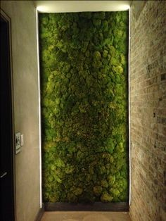 Interior Moss wall @ bellyQ in Chicago.