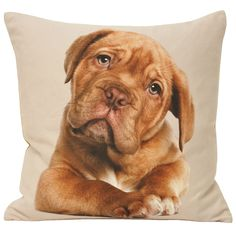 Bring instant love and affection into your room with this impossibly cute Labrador puppy cushion from Paoletti
