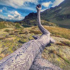 Bergwesen oder Natternhemd. Schobergruppe Wangenitzsee, Juli 2016 Nagl…