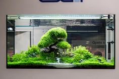 Aquascaping workshop  Hellweg Baumarkt @ Berlin   Roecklerstr. 108 13086 Berlin. Shared by Aquascaping-Symphony on facebook , pin by Aqua Poolkoh