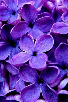 I like the color purple. Lilacs will do.