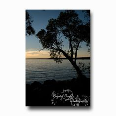 Sunset Silhouette Photography Tree Lake Beach by CrystalGaylePhoto, $3.50