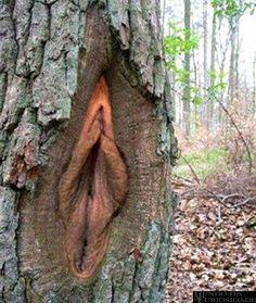 Pois é a natureza tem dessas coisas também, aqui fica algumas imagens engraçadas da natureza.