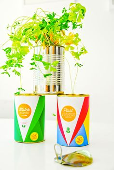 Herb Garden In Tin Can