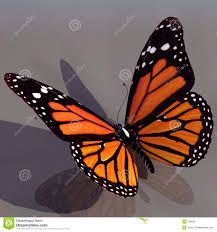 Image result for line drawing of monarch butterfly