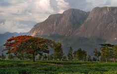 The imposing Mulanje Mountain 3rd highest in Africa!