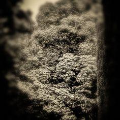 Dogwood Dreaming © Barbara Moon Batista