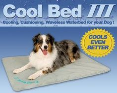K&h Manufacturing Cool Bed Iii Thermoregulating Pet Bed Medium 22 X 32 Dog Beds For Small Dogs, Cool Dog Beds, Large Dogs, Crate Bed, Dog Crate, Outdoor Dog Bed, Pet Allergies, Dog Carrier, Dog Supplies