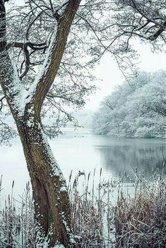 Pretty winter scene ...