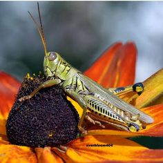 // Cool Bugs, Bees And Wasps, Grasshoppers, Beautiful Bugs, Alchemy, Ants, Garden Inspiration, Butterflies, Congratulations