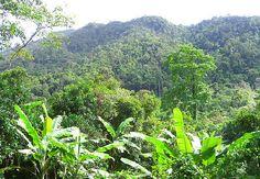 Thai Rainforest, Koh Chang