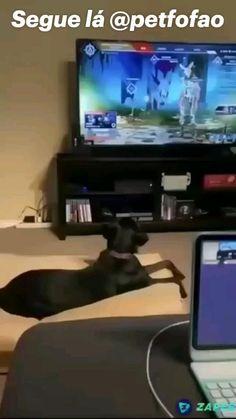 Funny Animal Memes, Funny Animal Videos, Funny Dogs, Funny Animals, Cute Animals, Funny Video Memes, Funny Short Videos, Dankest Memes, Text Jokes