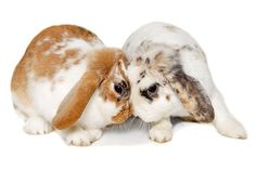 Have you ever wondered why so many people say rabbit rabbit on the first day of each month? Read on to learn about this odd, slightly superstitious tradition.