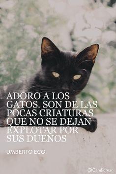 """Adoro a los #Gatos. Son de las pocas criaturas que no se dejan explotar por sus dueños"". #UmbertoEco #FrasesCelebres @candidman"