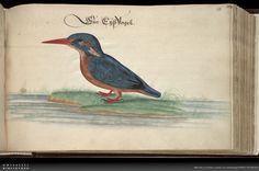 Vogel-, Fisch- und Thierbuch  Creator: Baldner, Leonhard Wikipedia  Shelf mark: 2° Ms. phys. et hist. nat. 3  PURL: http://orka.bibliothek.uni-kassel.de/viewer/image/1343227732549/169/