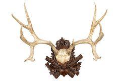 "Mule Deer Antler Plaque on OneKingsLane.com | cast resin | 22.5""h x 25""w x 15.5""d | 400.00 retail"