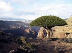 Image result for Socotra
