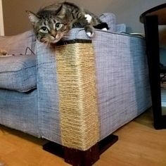 Fix Your Torn Or Cat Scratched Couch With The Following 13