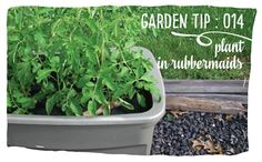 Rubbermaid container gardens are perfect for gardeners with limited space.