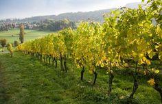 Vinho verde, portuguese green wine | Saudades de Portugal