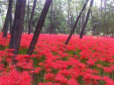 September in Kinchakuda