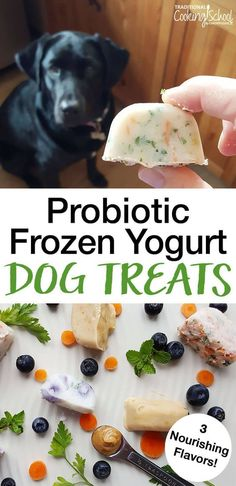 Dog Treats -- 3 Nourishing Flavors These Probiotic Frozen Yogurt Dog Treats are great for your dog's gut and freshen your dog's breath.These Probiotic Frozen Yogurt Dog Treats are great for your dog's gut and freshen your dog's breath. Puppy Treats, Diy Dog Treats, Healthy Dog Treats, Summer Dog Treats, Healthy Foods For Dogs, Treats For Puppies, Snacks For Dogs, Gourmet Dog Treats, Healthy Recipes