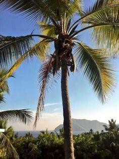 Manzanillo, Colima, México Beautiful Scenery, Outdoor Patios, Celestial, Sunset, Trips, Garden, Travel, Inspired, Future