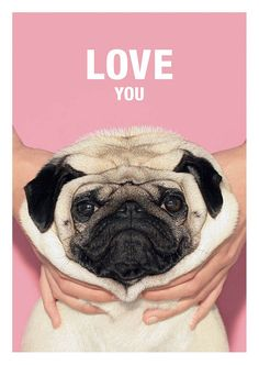 LOVE You - Loulou the Pug