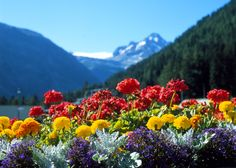 puro e fresco come fiori di montagna