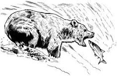 Image result for bear catching fish drawing