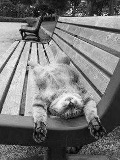 #Cats #animals - Stress Free, Happy Sunday, Sleepy Time, Kitty Cat, Parks Benches, Funny Humor, Fat