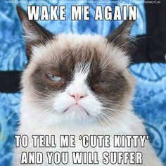This article lists out 10 Grumpy Cat memes that will make your day. This article also tells you the things that you did not know about Grumpy Cat. Grumpy Cat Quotes, Funny Grumpy Cat Memes, Funny Cats, Funny Animals, Funny Memes, Funny Quotes, Angry Cat Memes, Cute Cat Memes, Hilarious Jokes