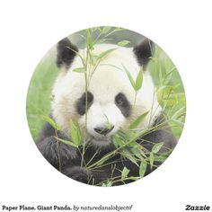 Plane Paper. Giant Panda Paper Plate  sc 1 st  Pinterest & Paper Plane. Zombie. Paper Plate   Paper paper Paper and Plates