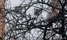 He's waiting for spring.. #photography #passion #catalinaelnphotography #winter #snow #cold #tree #dove