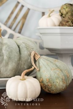 Blue hubbard squash and mini white pumpkins