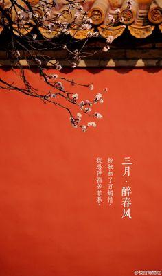 """【三月•醉春风•杏花】""""几枝红雪墙头杏,... China mood"""