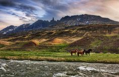 Icelandic horses. One of ten great resons to visit the country.  #Travel #Iceland #Horses #Nature