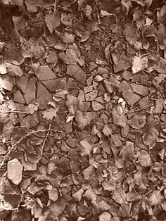 Pavement (Autumn 2013)