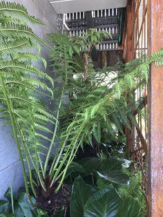 Lush tree ferns green up the basement