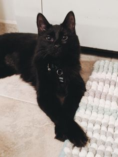 """Our recently adopted Winifred AKA """"Winnie"""" (from Hocus Pocus) Pretty Cats, Beautiful Cats, Animals Beautiful, Cute Funny Animals, Funny Cats, Animals And Pets, Baby Animals, Gato Animal, Cat Aesthetic"""