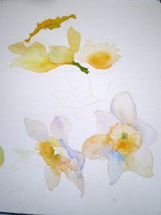 laura's watercolors: daffodils