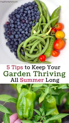 Keep your garden thr