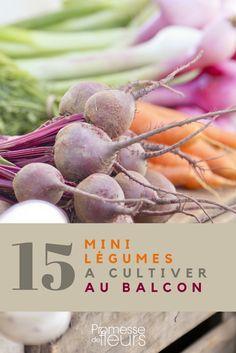 Cultivez des légumes au balcon ou en potager de poche : 15 variétés parfaitement adaptées